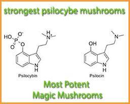 Pin On Grow Magic Mushrooms