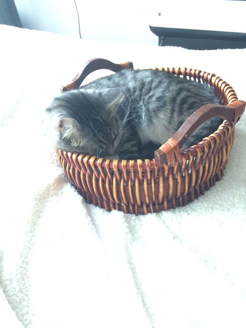 He sleeps where he wants