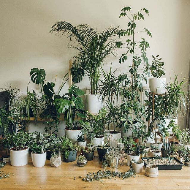 So we decided this might be a thing...all of our plants. #myplantfamily #Haarkon #HaarkonHouse #houseplants #plantgang #plantstagram #indoorplants #indoorjungle #urbanjunglebloggers #urbanjungle #ikealover #greenedit #greenterior #housegoals #jungalowstyle #plantsonplants #plantsofinstagram #plantsplantsplants #dsfloral #plantpeople #plantsmakepeoplehappy #dscollections