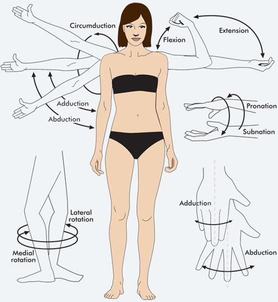 Types of joint movement worksheet  woman showing the various movements human body is capable also rh pinterest