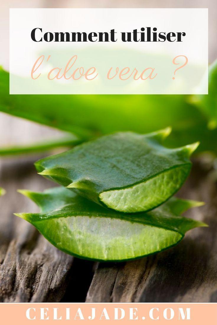 Aloe Vera : les bienfaits beauté et santé de cette plante