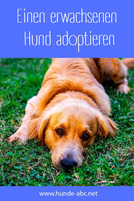 Einen Erwachsenen Hund Adoptieren In 2020 Hunde Hund Adoptieren Hunde Welpen