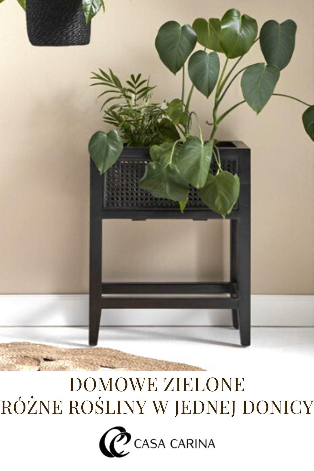 Rozne Rosliny W Jednej Donicy Decor Home Decor Furniture
