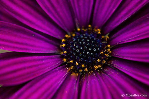Flower for tattoo