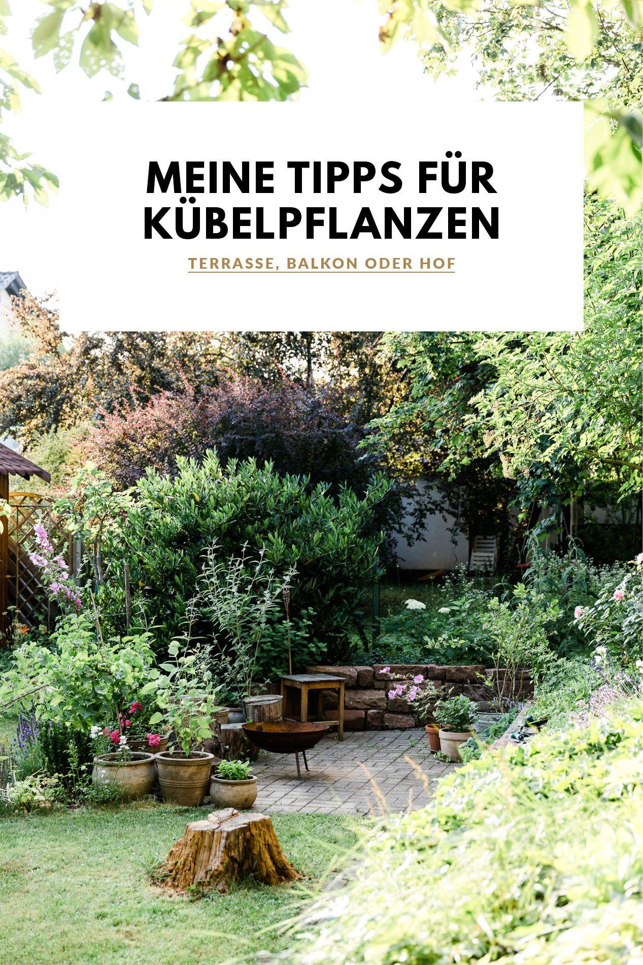 Gartenfeeling Ohne Garten Meine Tipps Fur Kubelpflanzen In 2020 Kubelpflanzen Pflanzen Garten Pflanzen