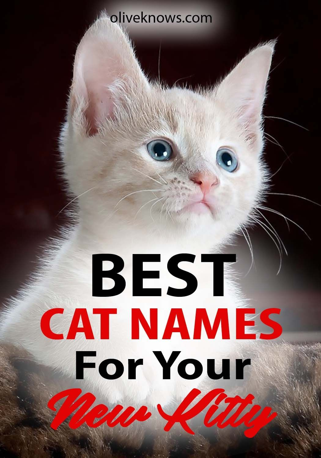 The Best Cat Names For Your New Kitty Oliveknows Cute Cat Names Cat Names Cats