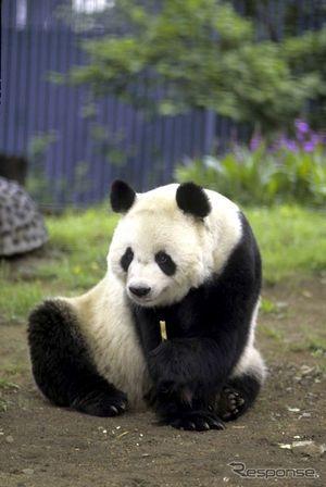 ★上野動物園パンダ