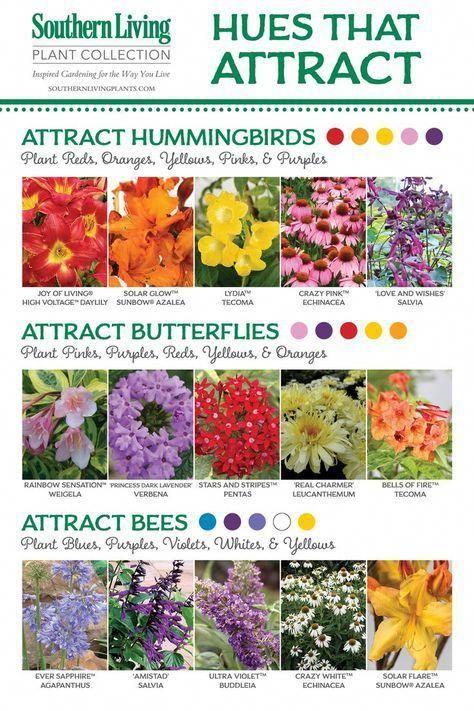 Natural Attraction Hummingbird Plants Bee Garden Plants