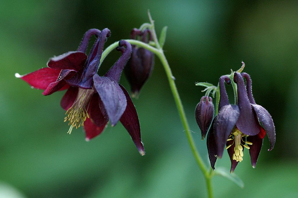 Pin On Dark Flowers