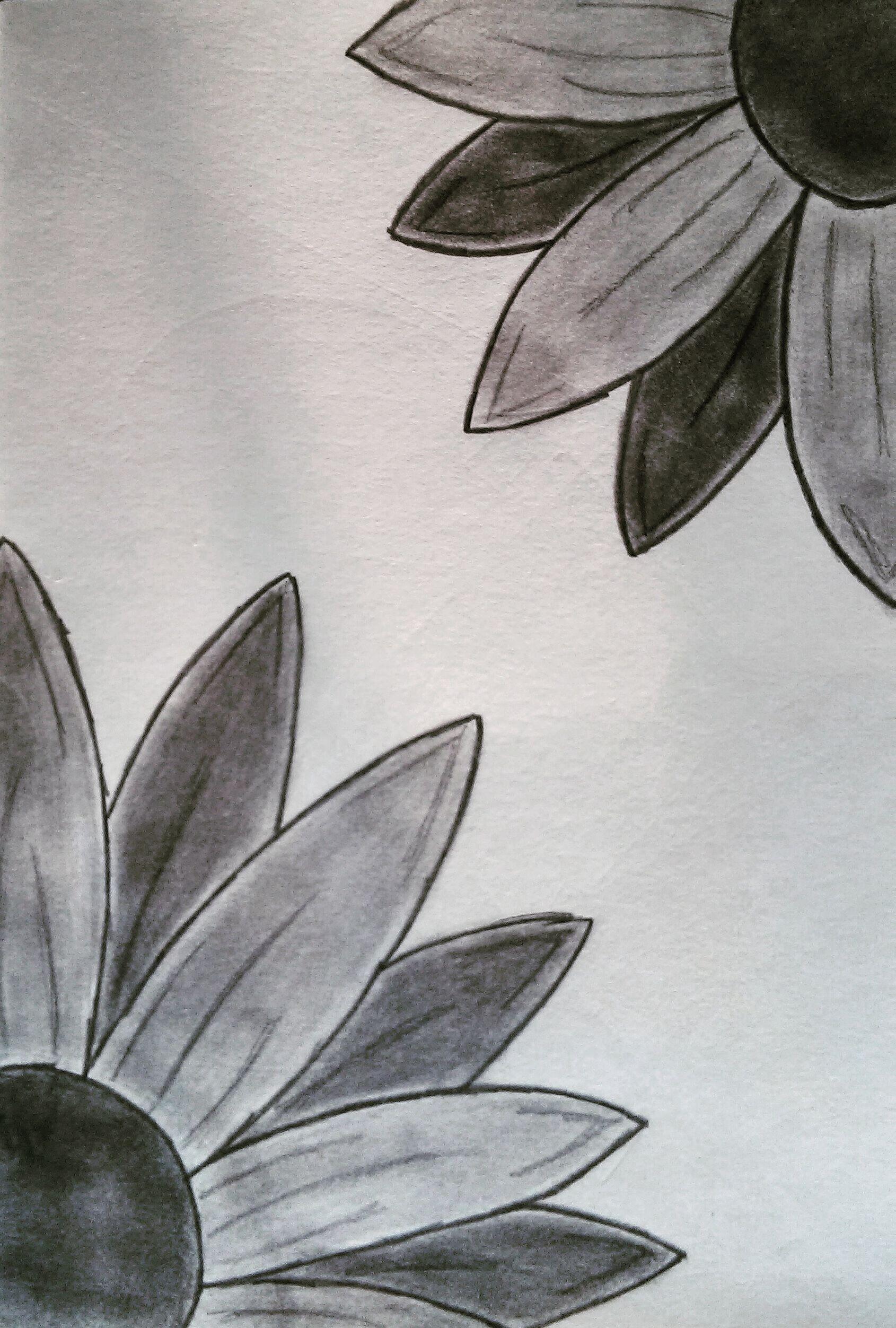 Peek A Boo Flowers Easy Drawings Easy Drawings For Beginners Pencil Drawings