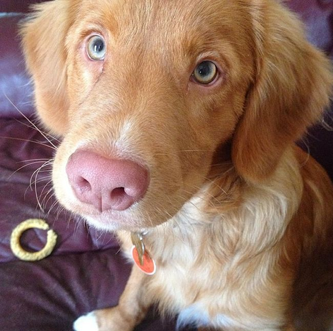 13 Puppies Whose Eyes Will Melt Your Heart Into A Gooey Puddle