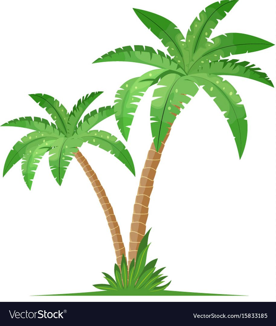 Tropical Palm Trees Isolated On White Background Coconut Trees Vector Illustration In Flat Style Palm Tree Drawing Palm Trees Painting Coconut Tree Drawing