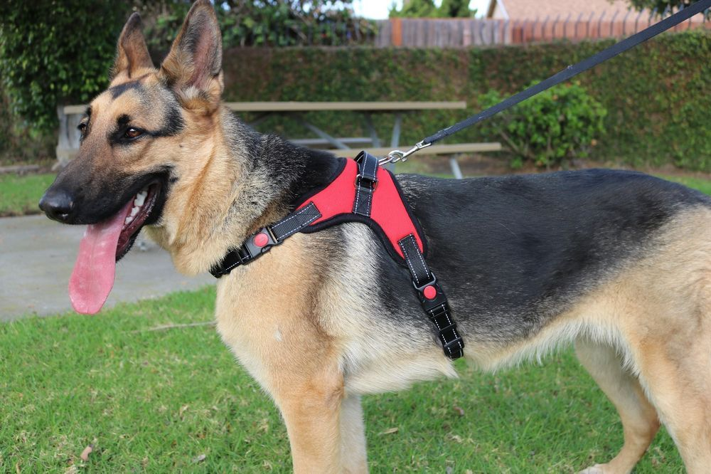 Quality Dog Adjustable Vest Harness. Sizes for Puppy to Large Adult