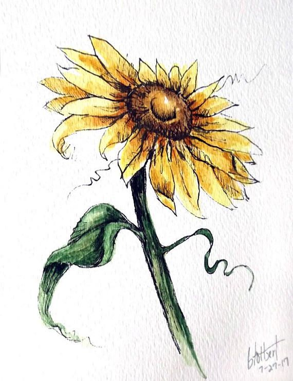 Originalvorlage Einer Sonnenblume Feder Tusche Und Aquarell