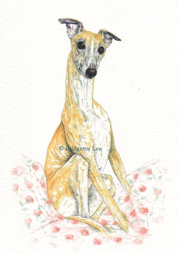 LARGE  Whippet greyhound PUPPY DOG Watercolor painting  A3 size By Bridgette Lee