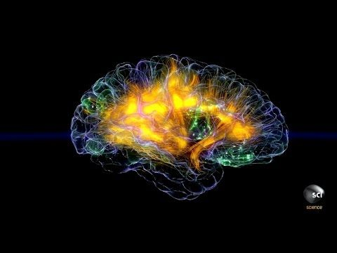 Are Pathological Liars Brains Wired Differently