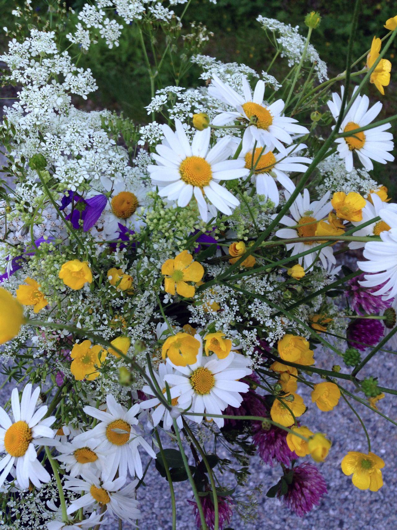 Classic Midsummer Flowers Midsummer Flowers Plants