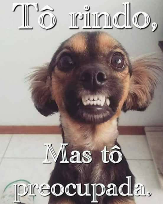 Cute Dog Videos For Whatsapp Status : videos, whatsapp, status, Videos, Engraçados, Funny, Animals,, Humor,, Animal, Pictures