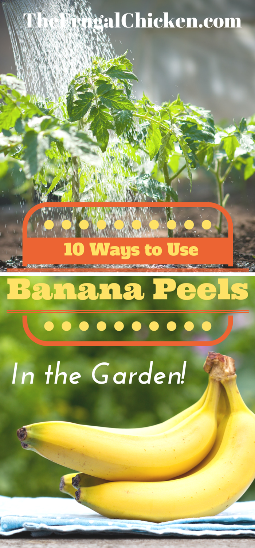 how to use banana peels as a fertiliser