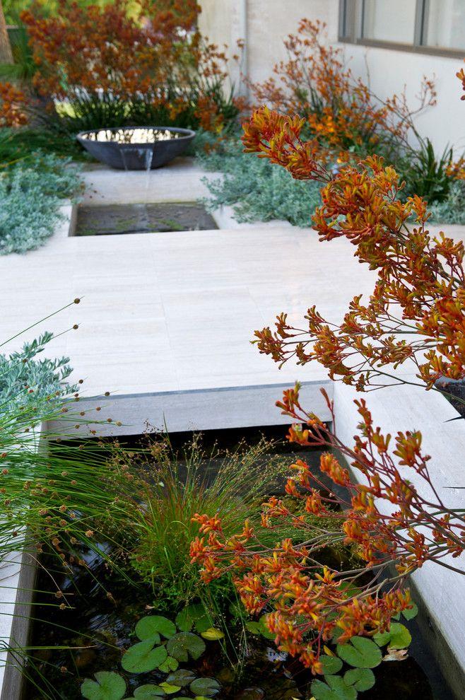 Dalkeith garden - contemporary - landscape - perth ...