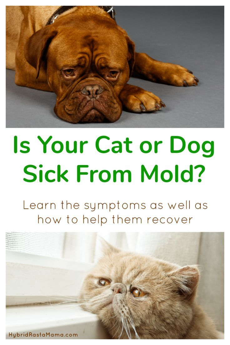 How Toxic Mold Affects Pets & How To Help Them Recover