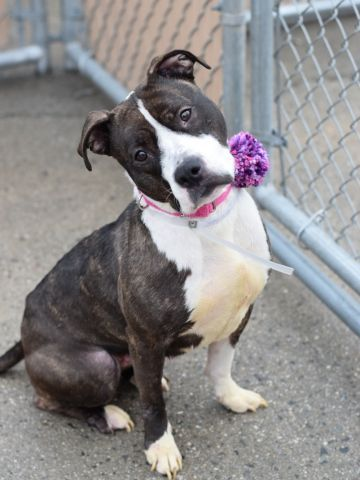 BOOMER aka PLUM - 18102 (ALT ID A1101624) - - Brooklyn TO BE DESTROYED 01/20/18 **NEEDS A NEW HOPE RESCUE TO PULL** - Click for info & Current Status: http://nycdogs.urgentpodr.org/boomer-aka-plum-18102-alt-id-a1101624/