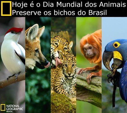 Dia Mundial dos Animais e da Natureza.