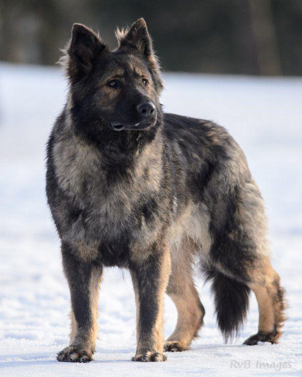 Plus adapté la legende du loup noir | Voir le résultat de dépistage de KU-19