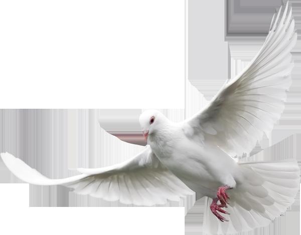 White Dove Free Clip Art Clip Art New Background Images