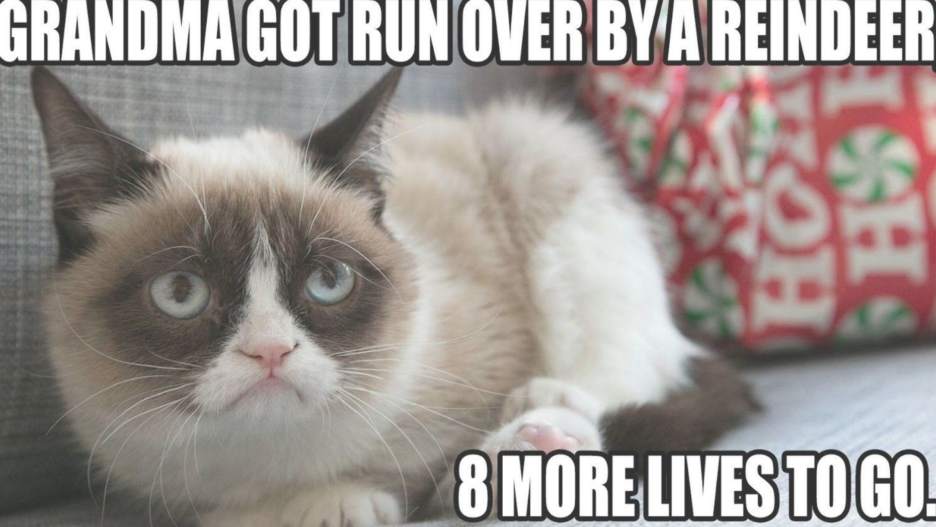 The Collection Of Today Are Especially For You And Grumpy Cat Grumpy Cat Memes Twinkle Twinkle Are Grumpy Cat Christmas Funny Grumpy Cat Memes Grumpy Cat Meme