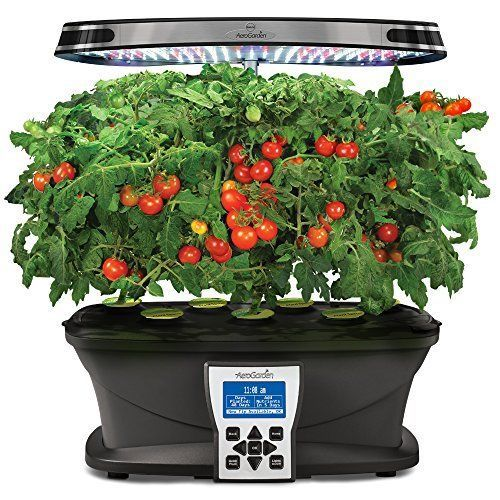 Herb Indoor Red Heirloom Cherry Tomato Seed Hydroponic 7 400 x 300