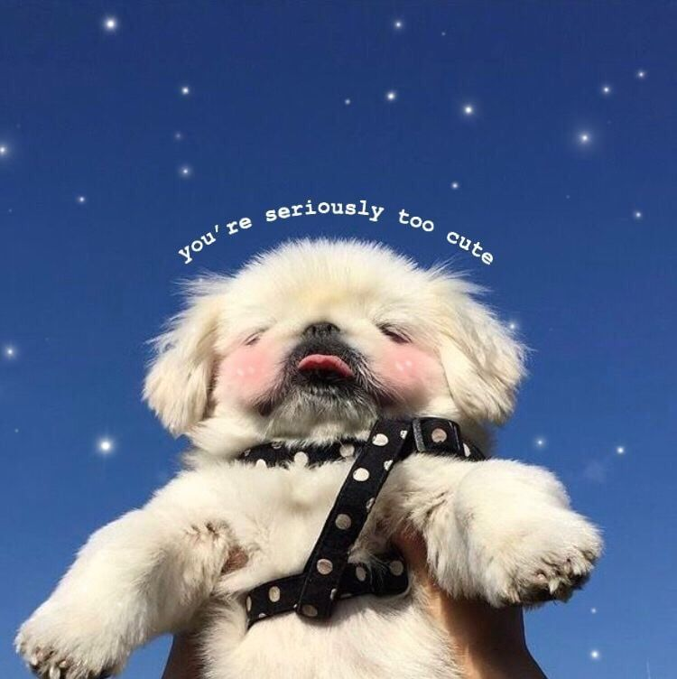 Love Aesthetic Et Puppy Image Sur We Heart It Cute Love Memes Dog Quotes Funny Animal Memes