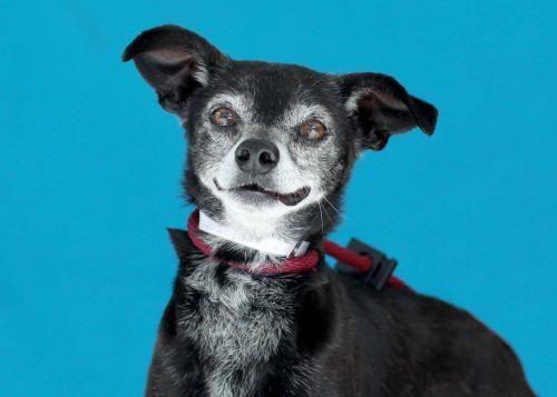 Gayweho Dogs 4 U On Gayweho Dogs4u Dogs Rescue Dogs Adoption