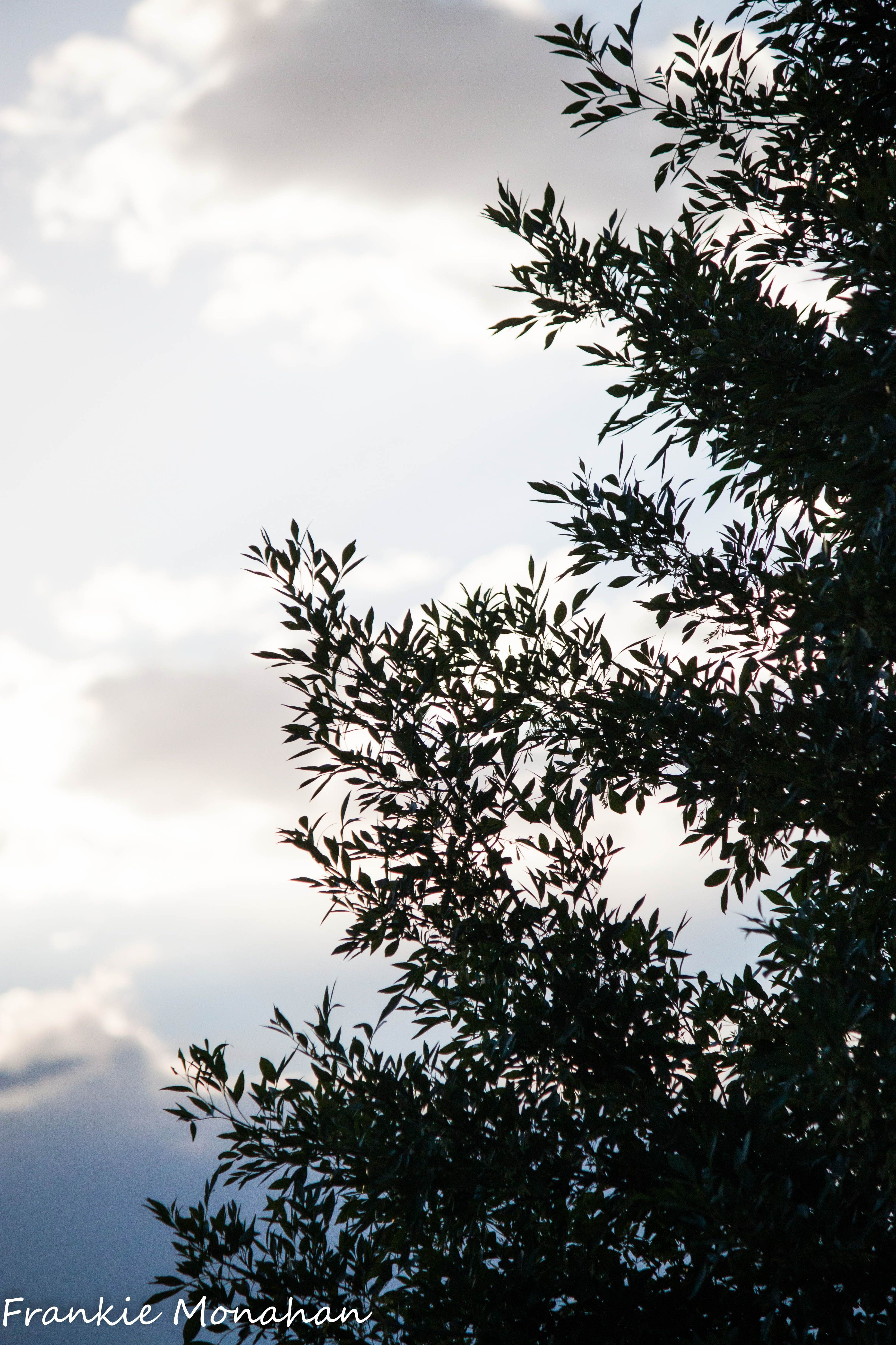 clouds, trees, landscape