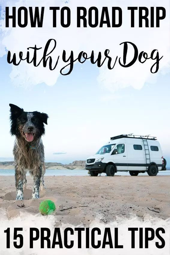 Romantic travel  Road trip tips with dogs, Road trip tips with baby, cheap Ro…