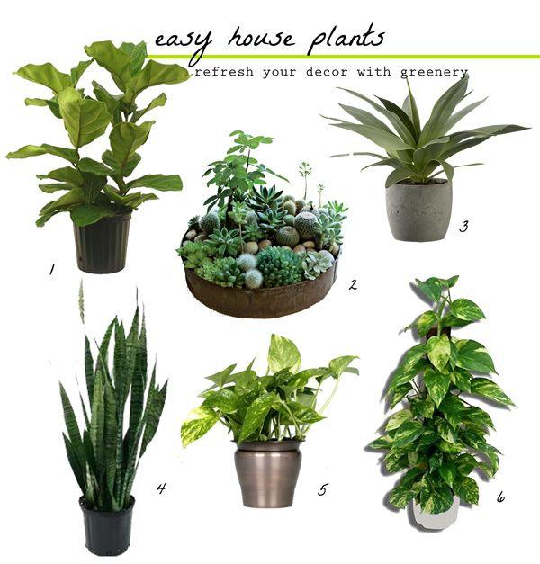 Fresh Greens Decorating With Houseplants Plants 400 x 300
