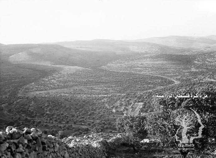 اطلالة على بساتين الزيتون في قرية عين كارم القدس 1934 م Jerusalem Beautiful Places Natural Landmarks