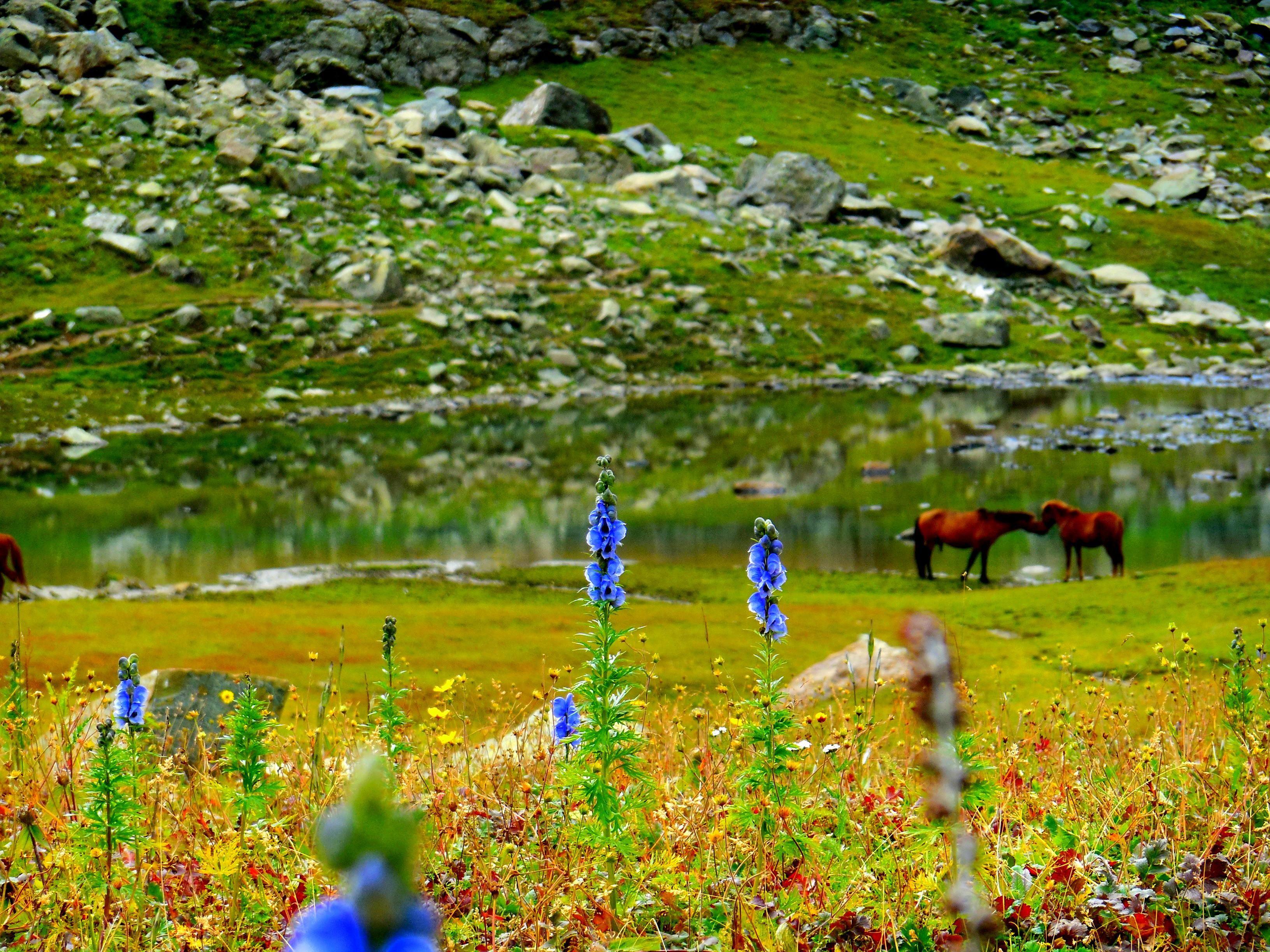 The Meadows of Sonamarg Jammu and Kashmir India outdoors