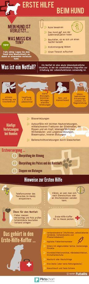 """Photo of Información importante sobre el tema de """"primeros auxilios para perros"""" – reglas de conducta …"""