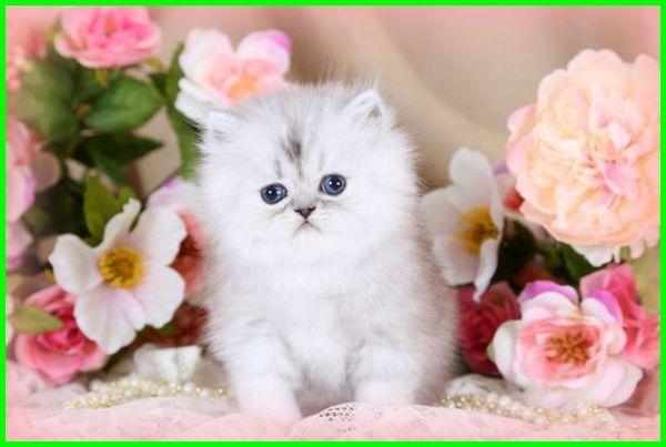 Ide+ Gambar Gambar Kucing Lucu Dan Cantik Paling Bagus