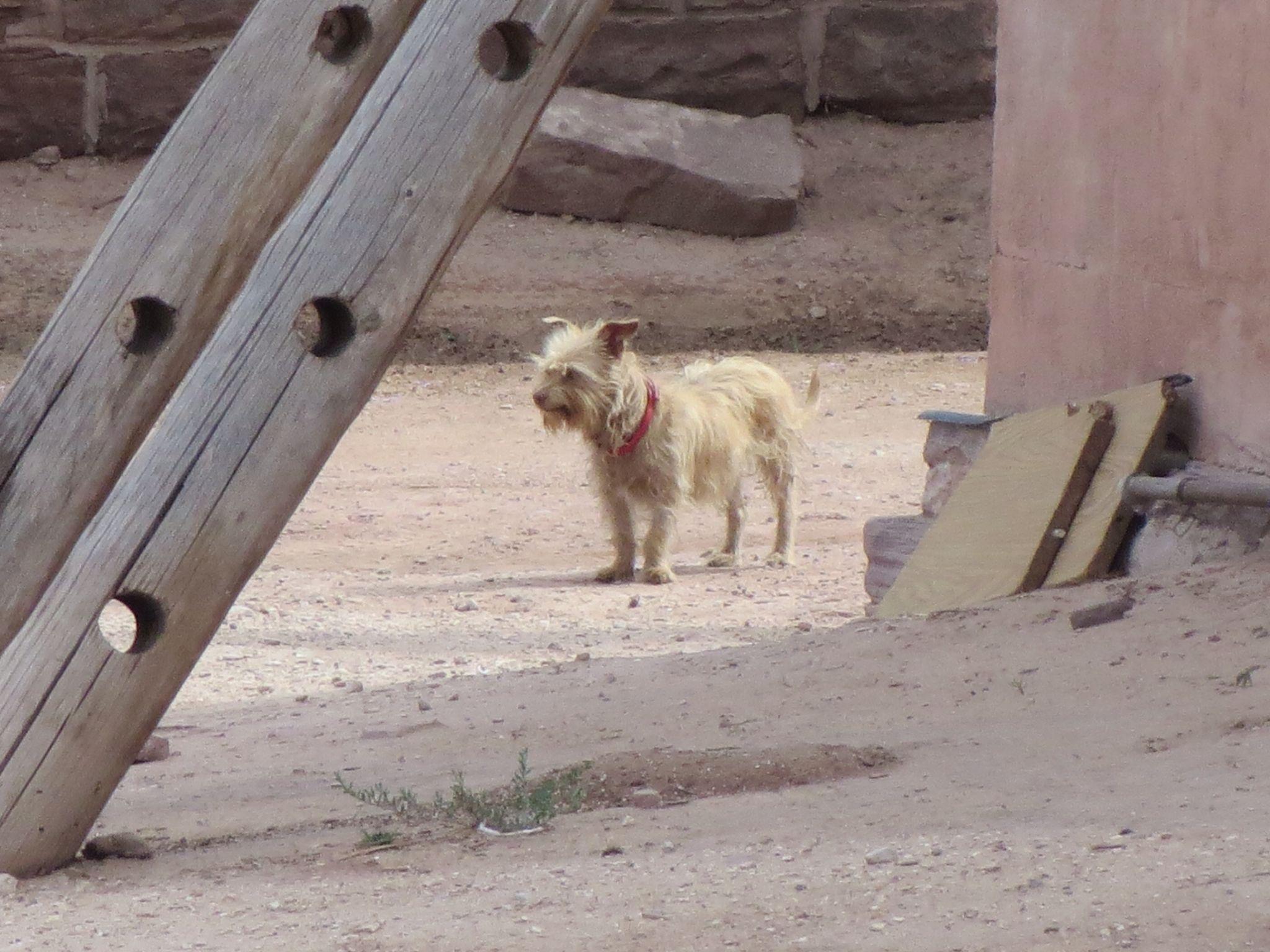 Tough dog on the Indian Rez