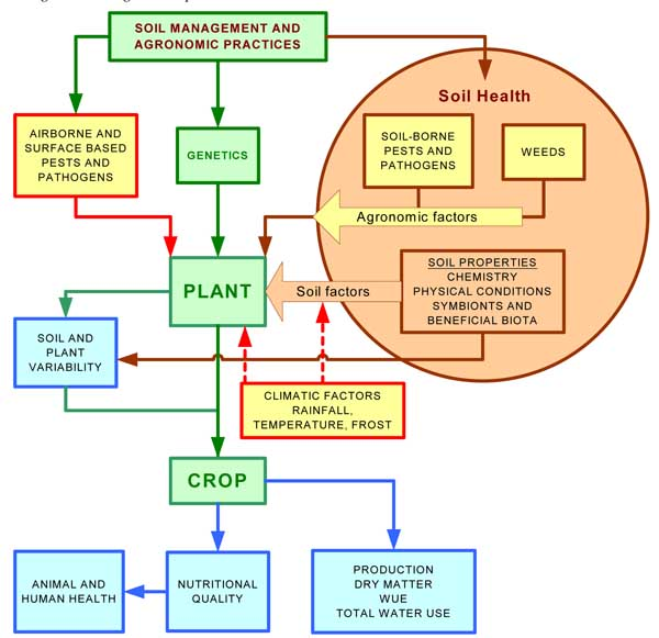 edaphic effects Google Search Soil health, Soil