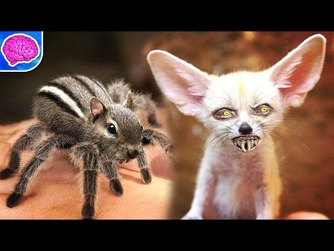5 Cute Animals That Can Totally Kill You Some of the earth ...