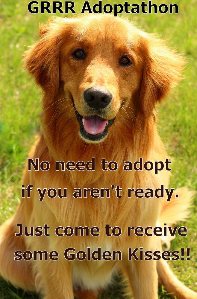 March.07(sat) 2015 petsmart, Rossford OH Golden