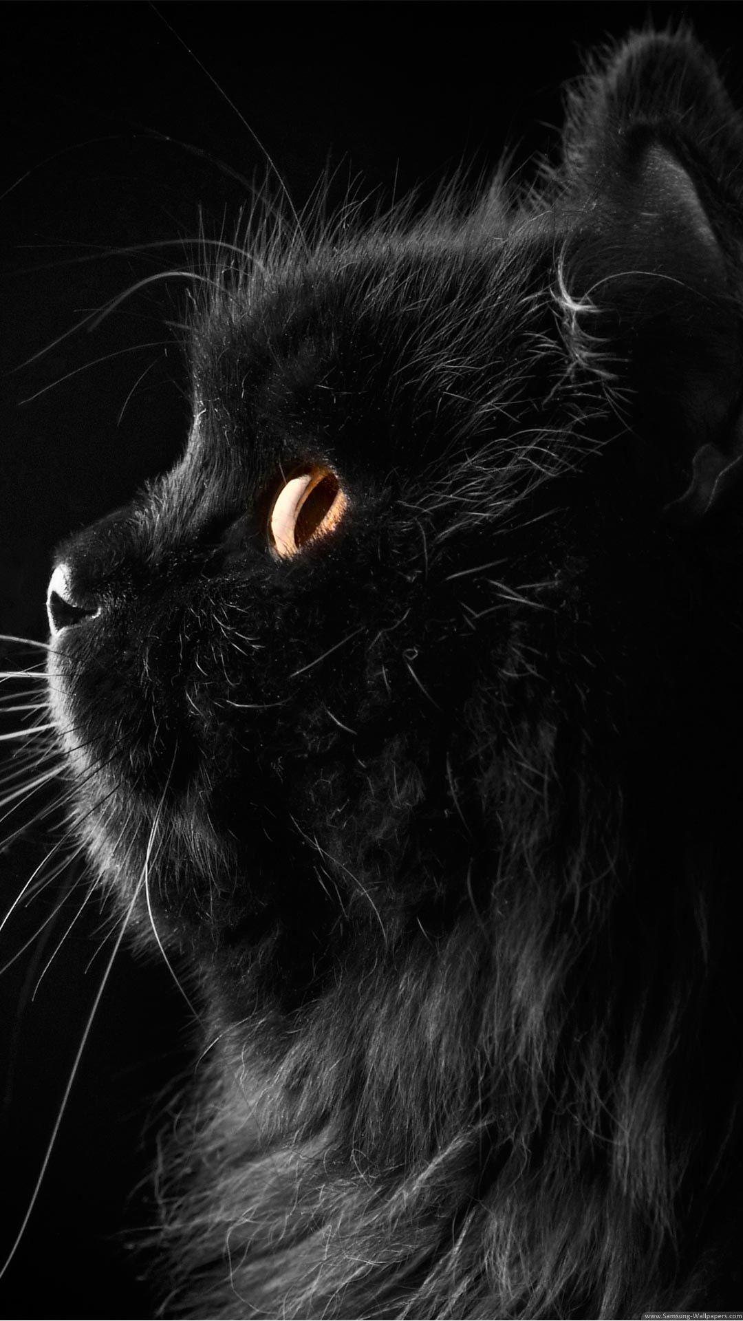 Cat Profile Cat Wallpaper Cute Black Cats