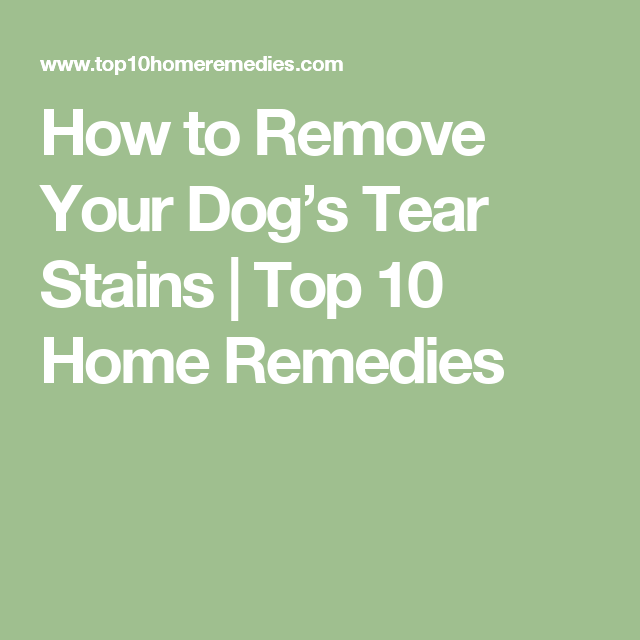 How to Remove Your Dog's Tear Stains | Top 10 Home Remedies