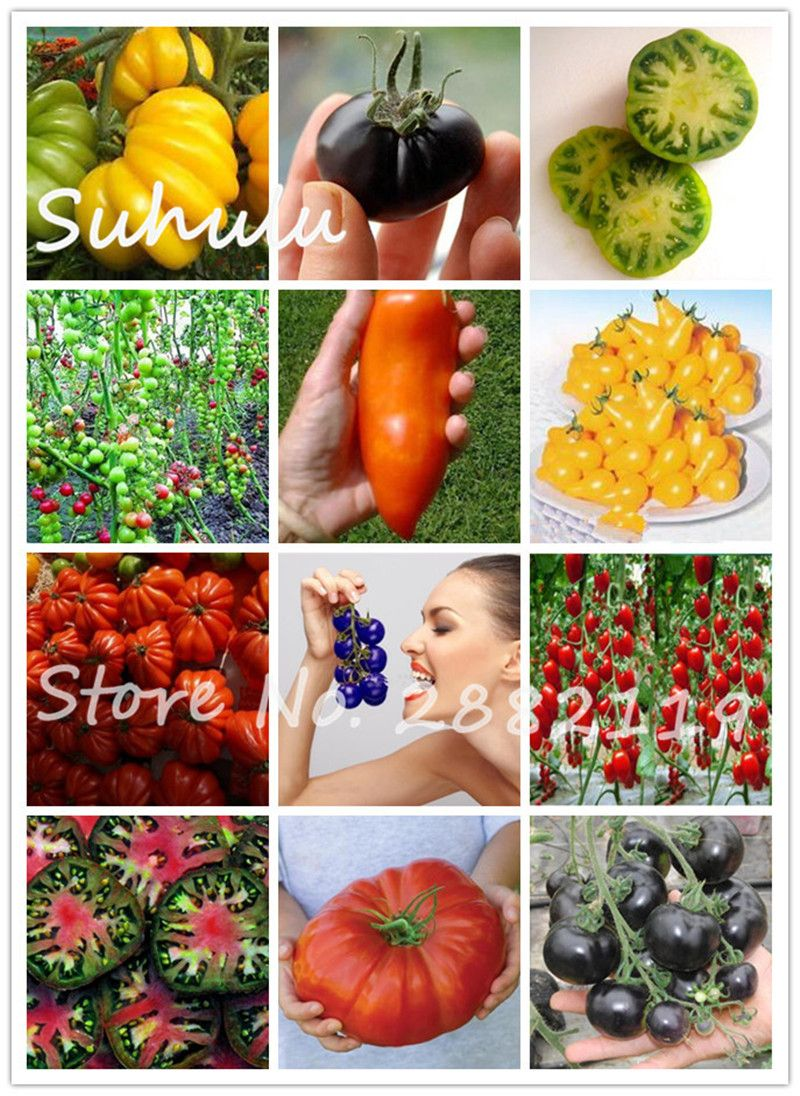100 pcs tomatos organic edible delicious sweet fruit and vegetable seeds 16 kinds  variety complete easy-growing mix colors dIY