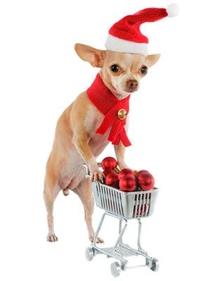 It's a chihuahua Christmas! | It's the Most Wonderful Time of the ...