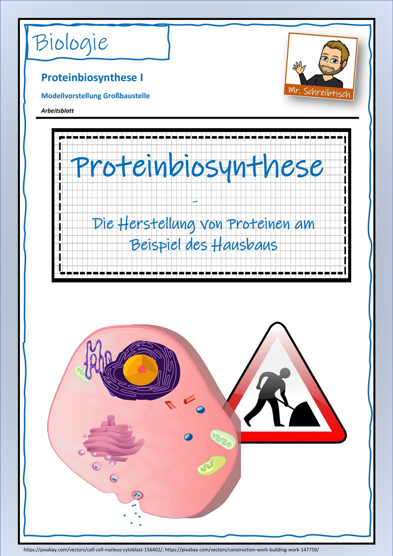 Einführung Proteinbiosynthese   Modellvorstellung Großbaustelle ...