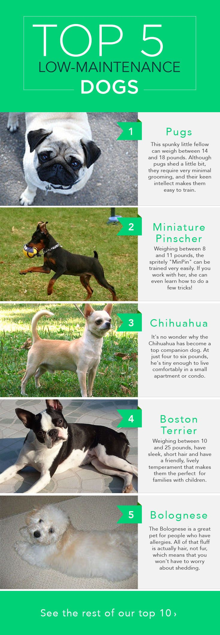The Top 10 Low Maintenance Dogs Low Maintenance Dog Breeds Dog Breeds Best Dog Breeds